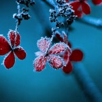 snow photography tips
