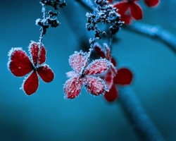 5 Snow Photography Tips to Take Great Shots