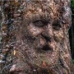 Mask a Face on Tree Bark in Photoshop