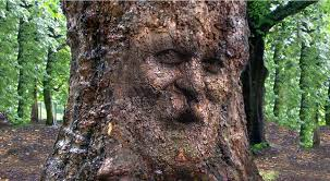 How to Mask a Face on Tree Bark in Photoshop?