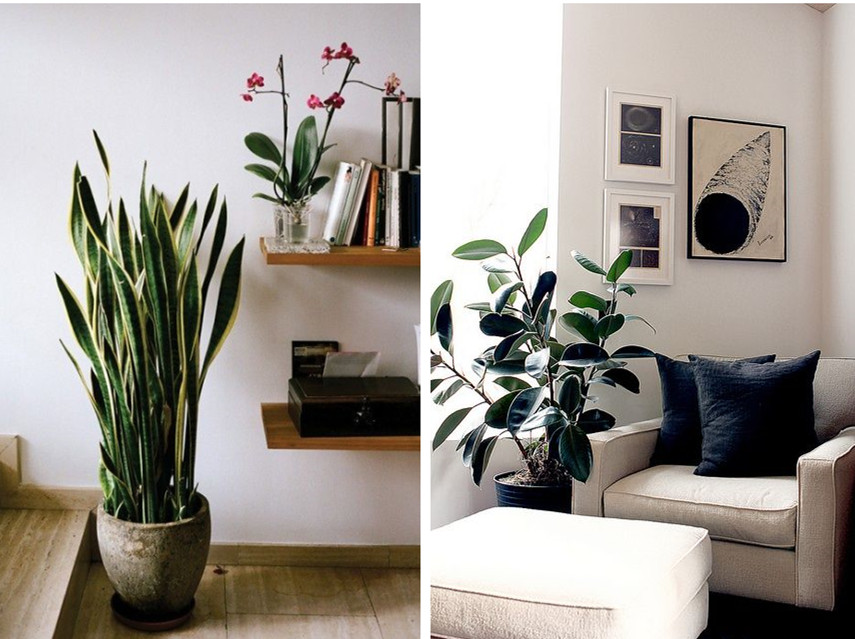Homeplant decor idea 1